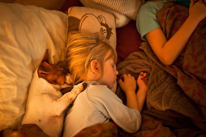Маленькая девочка и ее четвероногий друг крепко спят.