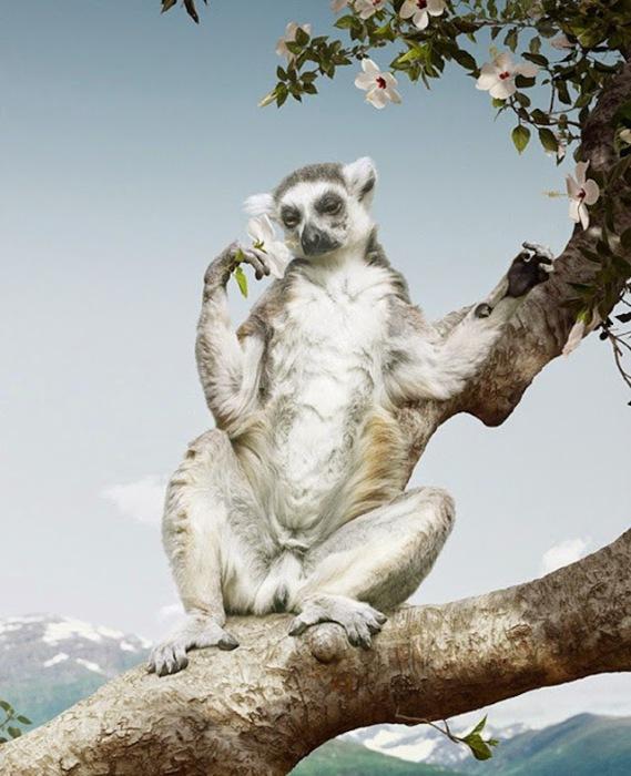 Красочные фотографии дикой природы от Симена Йохана (Simen Johan).