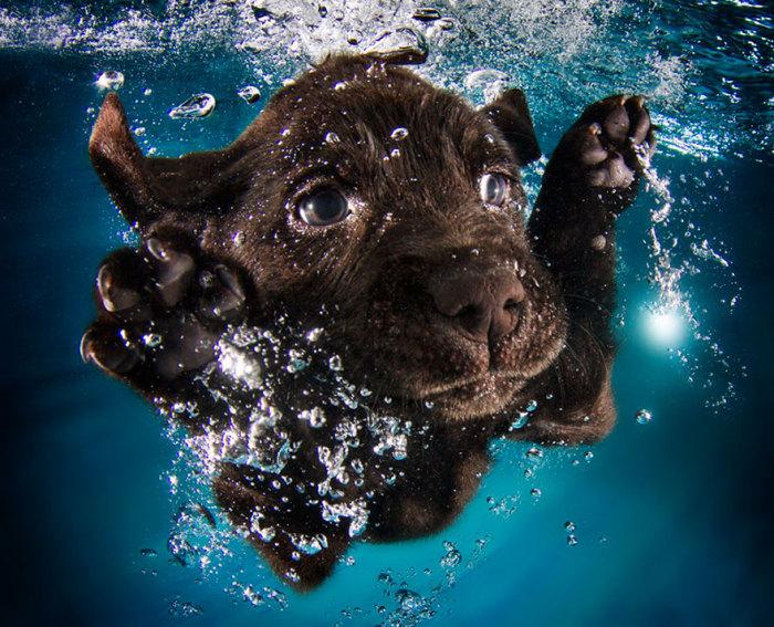 Щенки, барахтающиеся в бассейне, на фотографиях Seth Casteel.