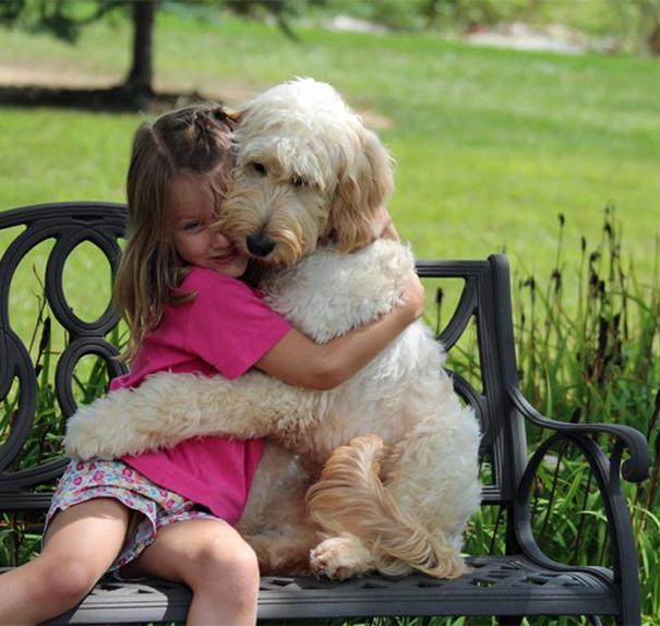 Очаровательная дружба между маленькой девочкой и собакой.