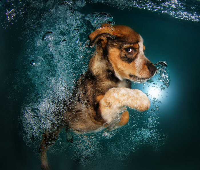 Трогательные снимки щенков под водой от Seth Casteel.