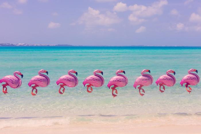 Розовые фламинго на фоне потрясающего пейзажа.