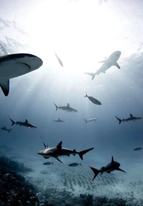 Уникальные снимки акул - одних из самых опасных морских хищников.