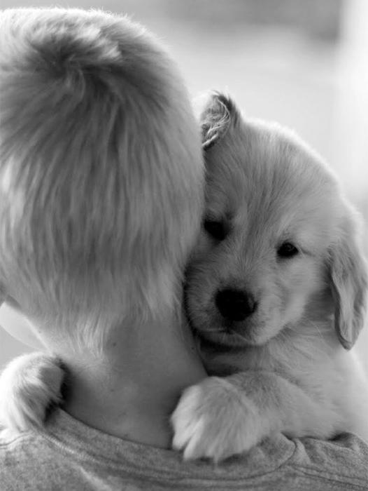 Очаровательная фотография щенка и его маленького хозяина.
