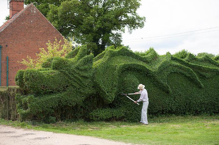 Живая изгородь в форме огромного дракона.