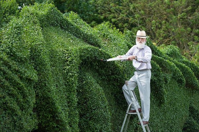 Джон Брукер (John Brooker) за работай над живой изгородью.