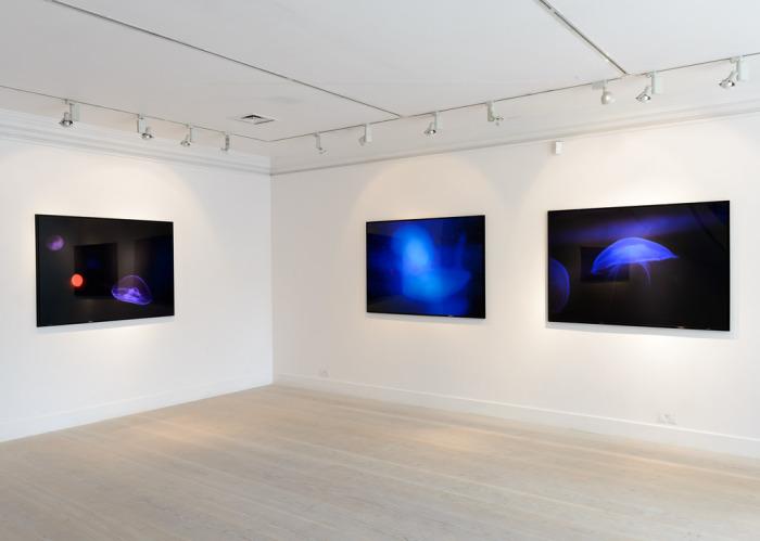Прямая трансляция из аквариума на экраны, расположенные в галереи Gazelli Art House.