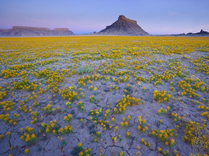 Необыкновенное явление природы на фотографиях Guy Tal.