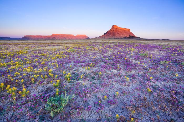 Пустыня Западной Америки в новом цвете.