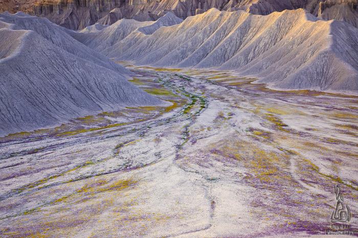 Снимки безжизненных земель во время цветения полевых цветов от Guy Tal.