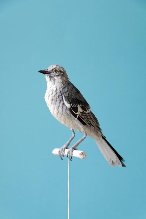 Хрупкие бумажные птицы от Дианы Белтран Херрера (Diana Beltran Herrera).