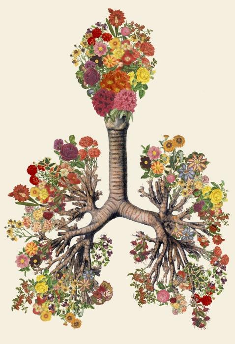 Человеческие органы, украшенные цветами, от Трэвис Бредель (Travis Bedel).