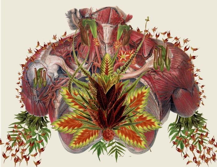 Необычные анатомические коллажи от Трэвис Бредель (Travis Bedel).