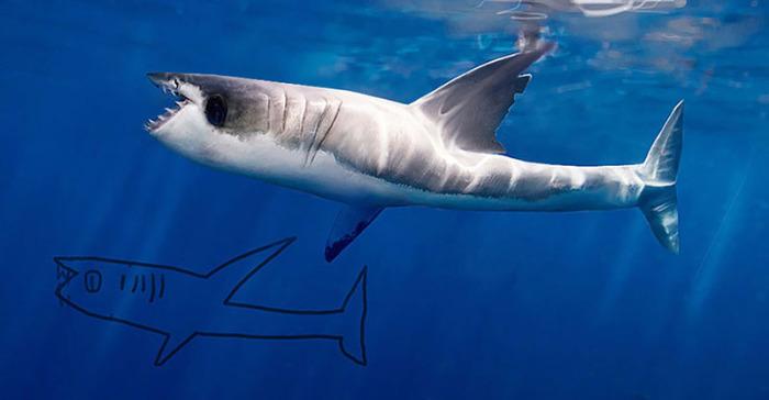 Профессиональная иллюстрация с изображением взятой из детских рисунков акулы.