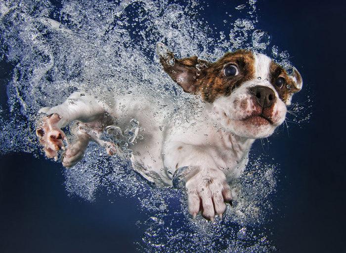 Очаровательные фотопортреты щенков под водой.