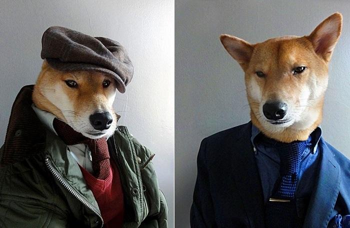 Пес носит одежду от модных брендов.