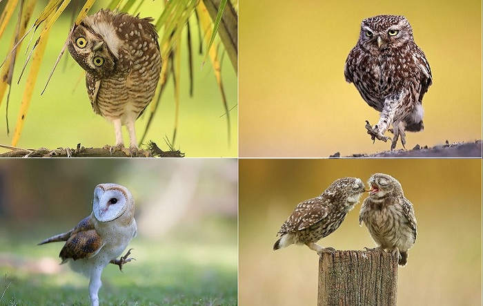 Самые трогательные снимки из жизни сов.