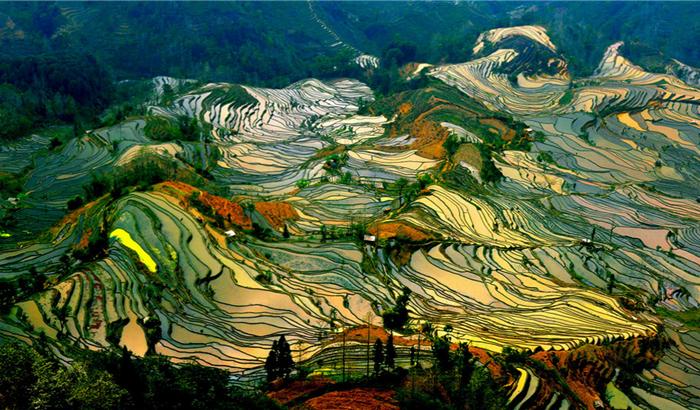 Самые чарующие снимки рисовых полей
