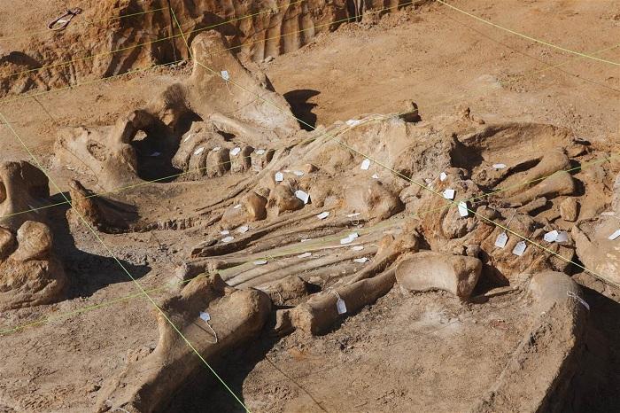 Возраст древних окаменелостей 20000-60000 лет.
