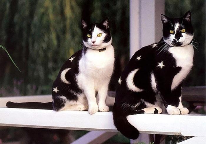 Оригинальный окрас кошек.