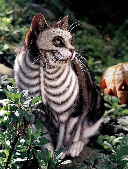 Кошка с окрасом скелета.