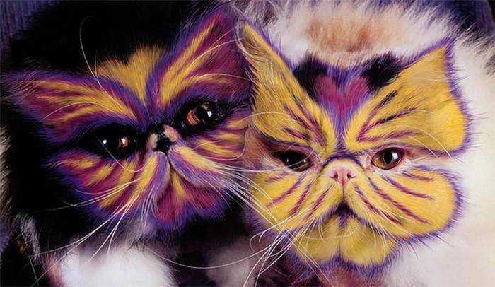 Catpainting - раскрашивание кошек.