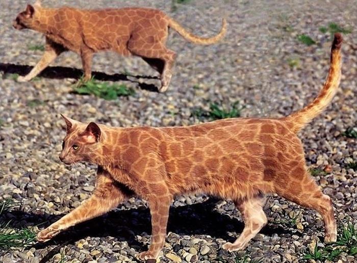Body art для кошек.