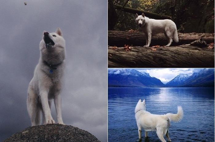 Лучшие снимки собаки на фоне природы.