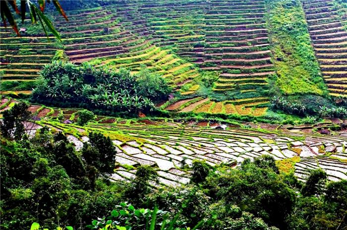 Рисовые террасы в Индонезии.