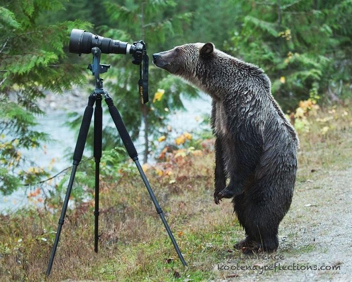 Молодой медведь осторожно обследует камеру.