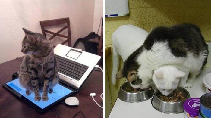 Кошачья логика.