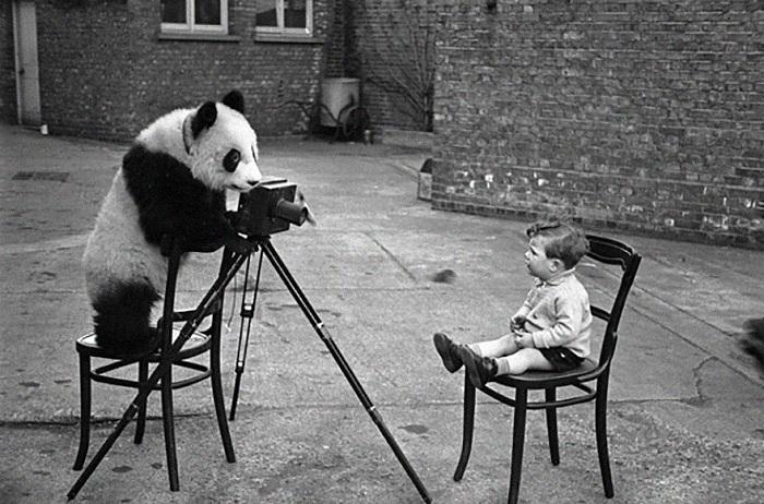 Ретро-фото панды с фотоаппаратом.