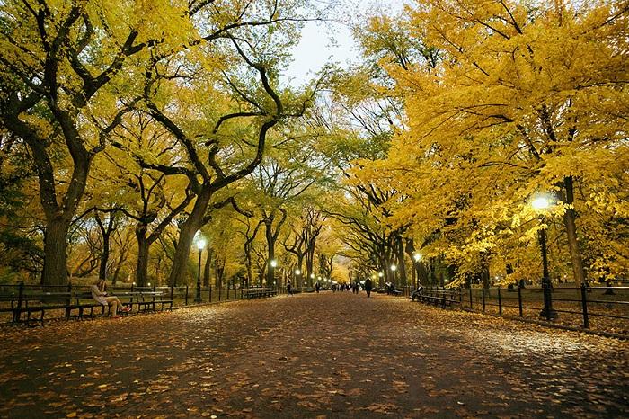 Центральный парк Нью-Йорка летом.