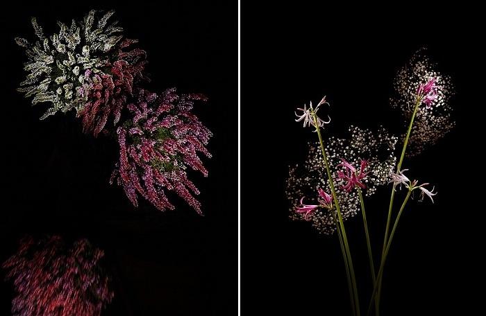 Flowerworks - «Цветочные фейерверки».