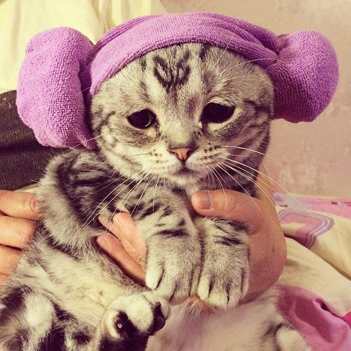 Самый грустный кот интернета.