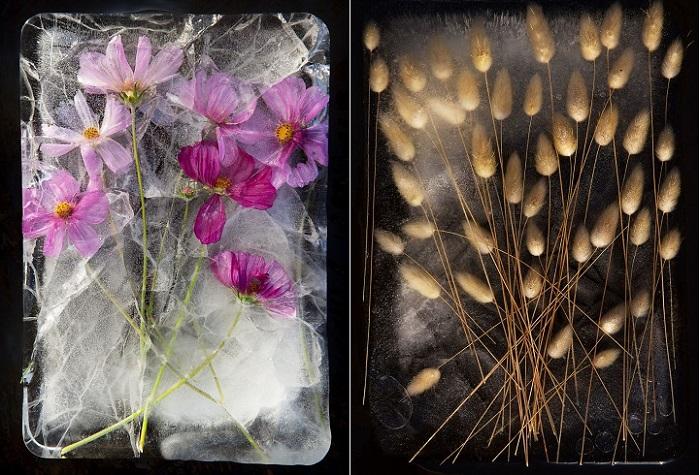 Замороженные цветы в огромных глыбах льда.