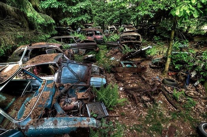 Свалка автомобилей в лесу.