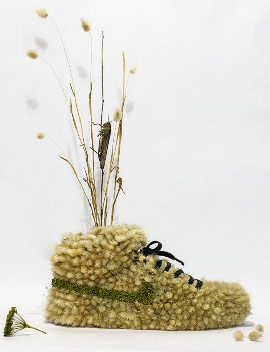 Гербарий в в виде кроссовка.
