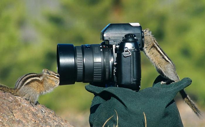 Бурундуки устраивают фотосессию.