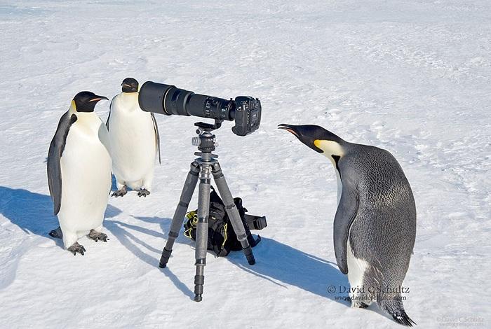 И на Южном полюсе тоже любят фотографироваться.