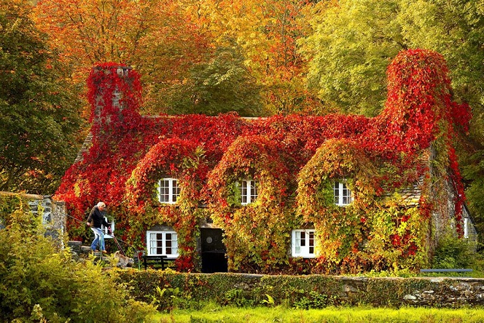 ��� - Tea house (North Wales). �����