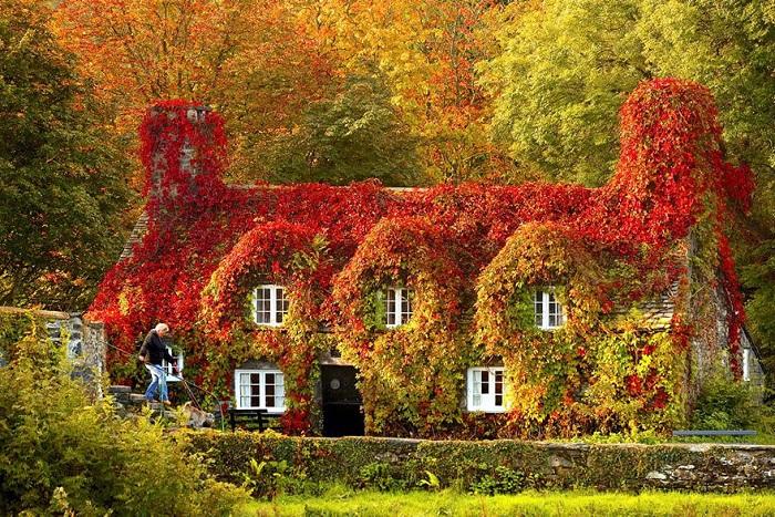 Дом - Tea house (North Wales). Осень