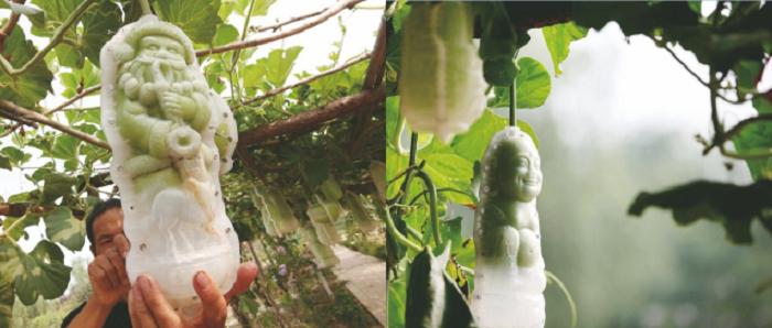 Пластиковые формы, в которые помещаются тыквы.