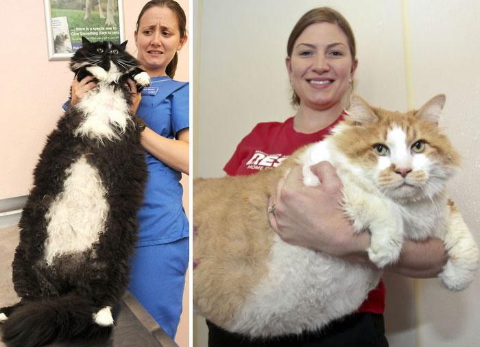 Огромные коты.
