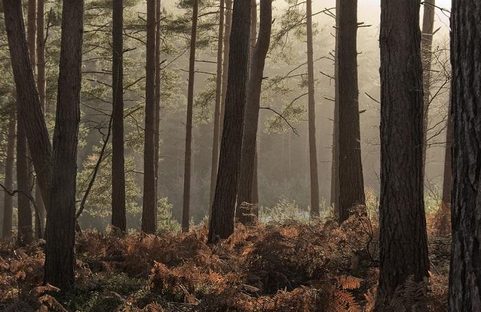 Лес в Англии Bourne Wood. | Фото: c2.staticflickr.com.