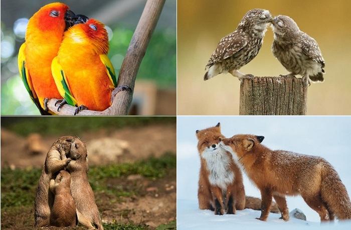 Умилительные фотографии целующихся животных и птиц.