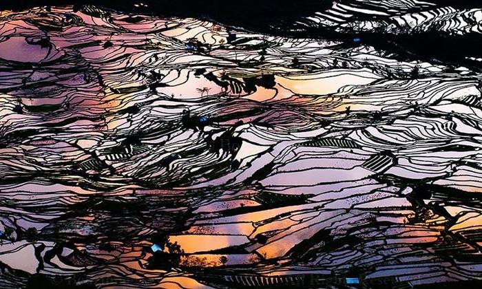 Рисовые поля в китайской провинции Юньнань.