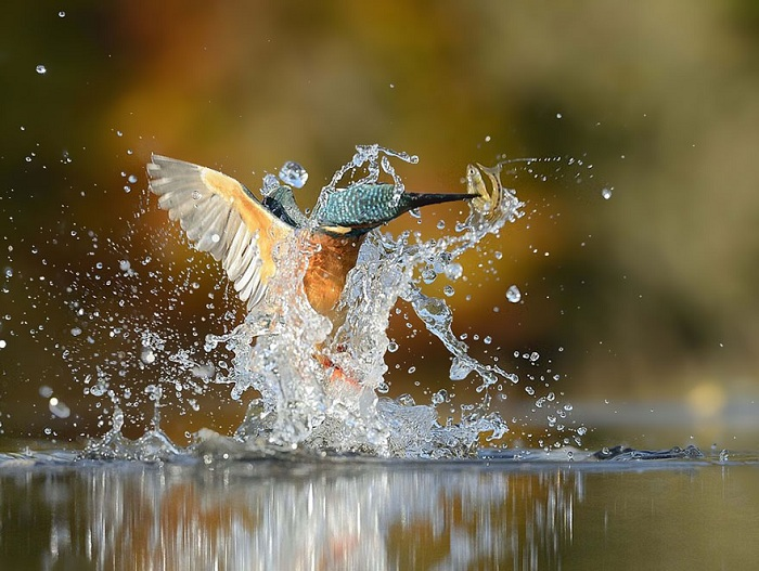 Снимок зимородка.