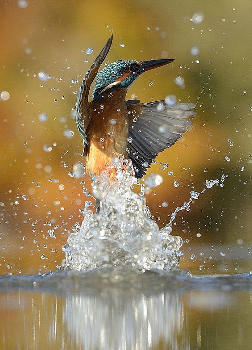 Птица в водяных брызгах.