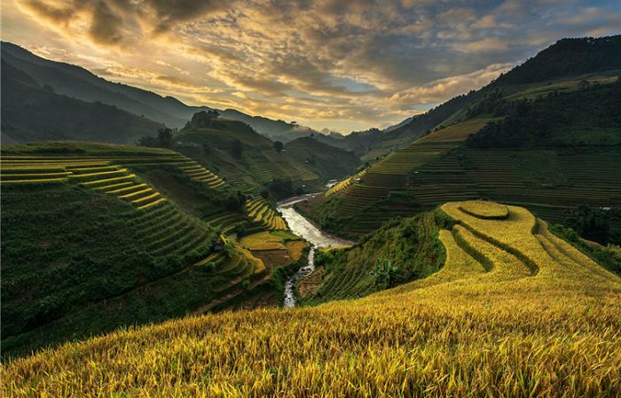 Золотистые террасы Вьетнама.